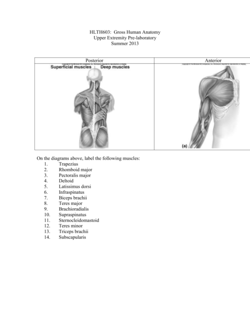 small resolution of upper extremity bone diagram