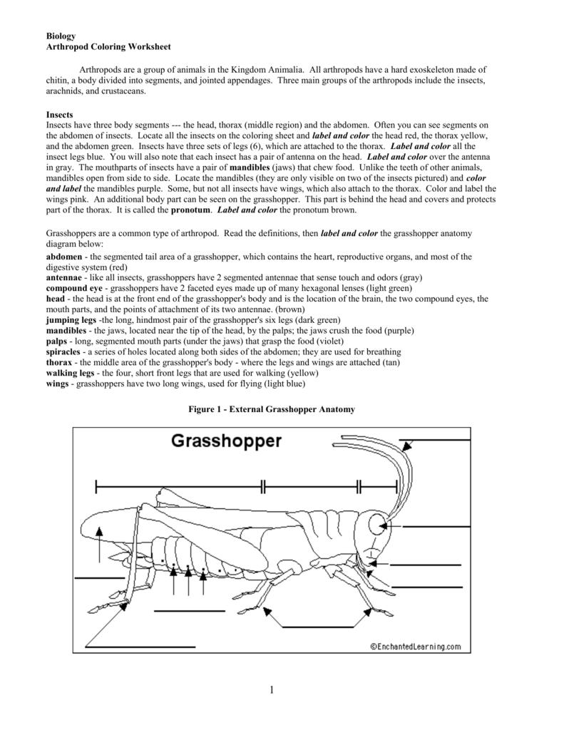 external grasshopper diagram jeep cherokee 1998 radio wiring body parts schematic library arthropod coloring worksheet