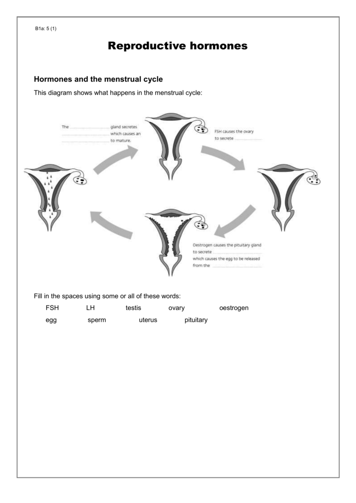 The Menstrual Cycle Worksheet