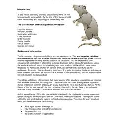 Rat Digestive System Diagram Quiz 2006 Mazda 6 Speaker Wiring Virtual Dissection Guide 008533680 1 99b71028b4939ed3dbcbe2d9202f4e6b Png