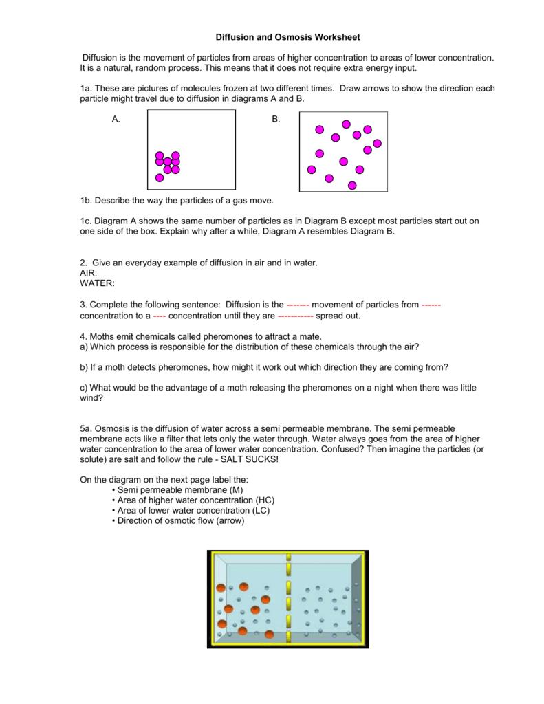 Diffusion Worksheet Key