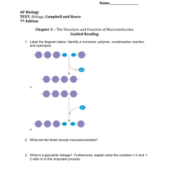 campbell and reece 7th edition chapter 5 the structure and function of macromolecules guided reading 1 label the diagram below identify a monomer  [ 791 x 1024 Pixel ]