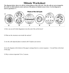 mitosis worksheet rh studylib net binary fission diagram binary fission diagram [ 791 x 1024 Pixel ]