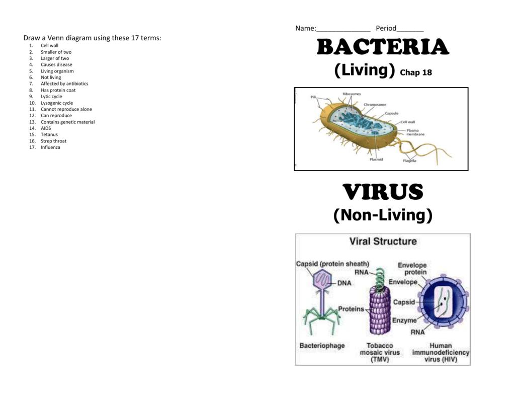 Bacteria Amp Virus Booklet
