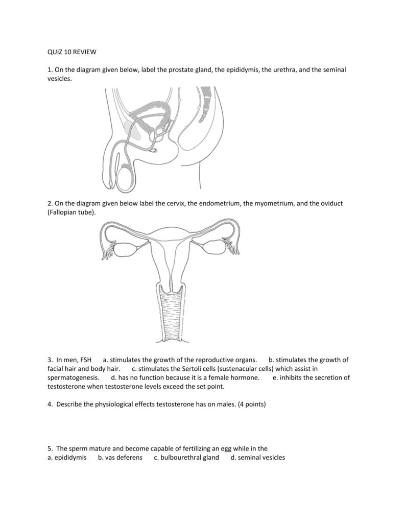 hight resolution of reproductive diagram quiz