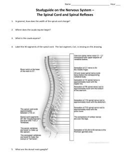 Spinal Cord Physiology PPT
