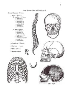 Skull Bone Markings Quiz