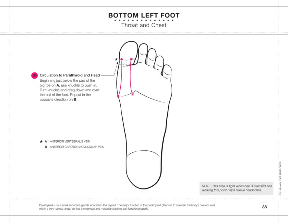 medium resolution of diagram bottom of foot