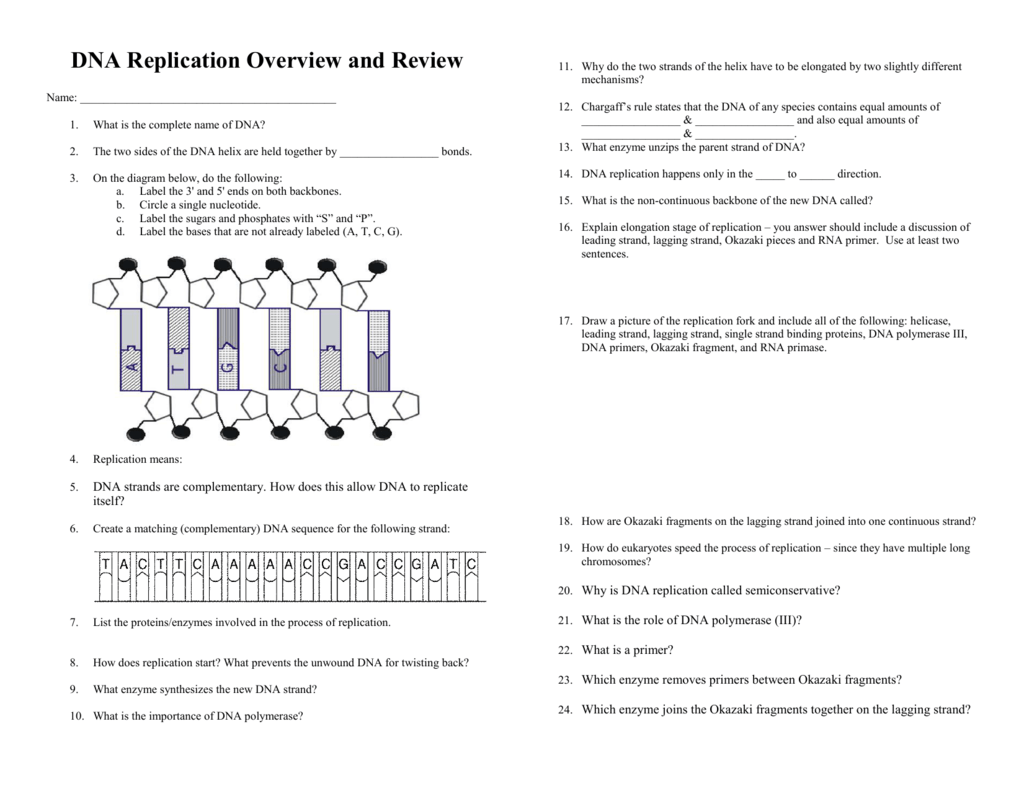 Worksheet 21 Dna Replication Answer Key