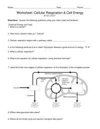 Worksheet Cellular Respiration Cell Energy Answer Key ...