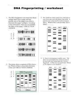 Dna Profiles & Fingerprinting Worksheet
