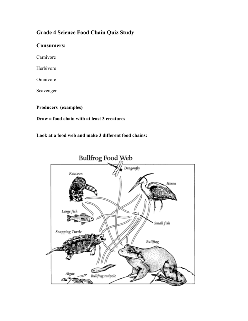 Grade 4 Science Food Chain Quiz Study Consumers: