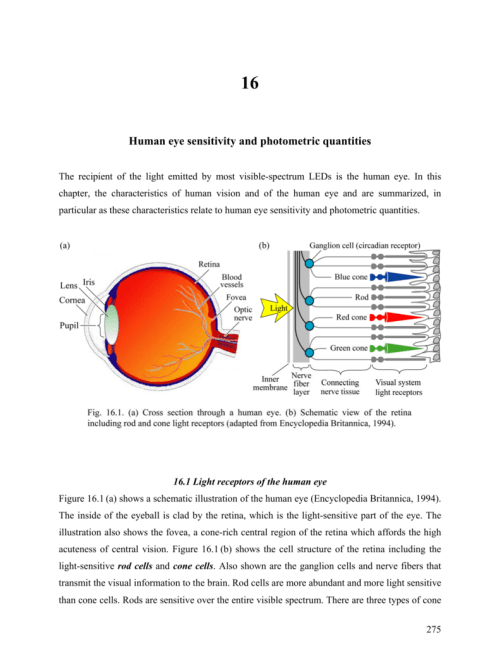 small resolution of 16 human eye sensitivity and photometric quantities the recipient of the light emitted by most visible spectrum leds is the human eye