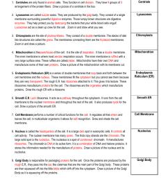 Cell City Widget Worksheet   Printable Worksheets and Activities for  Teachers [ 1651 x 1275 Pixel ]