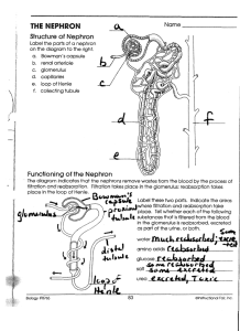 Name The Kidney and Nephron Directions: Watch the podcast