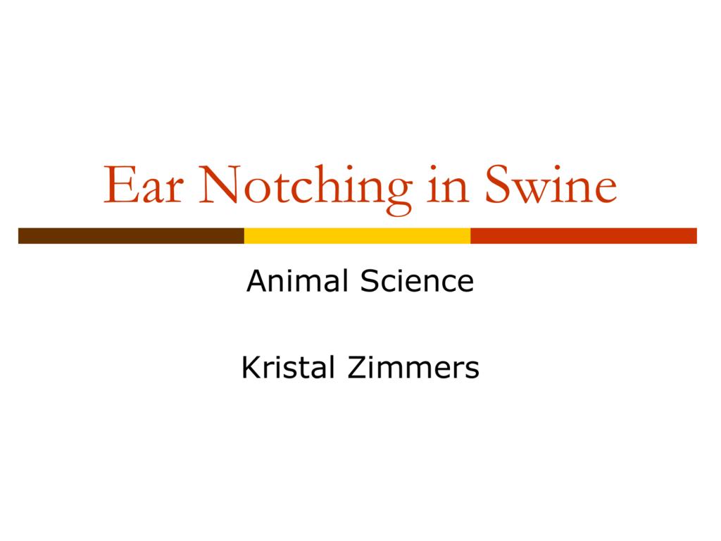 Ear Notching In Swine