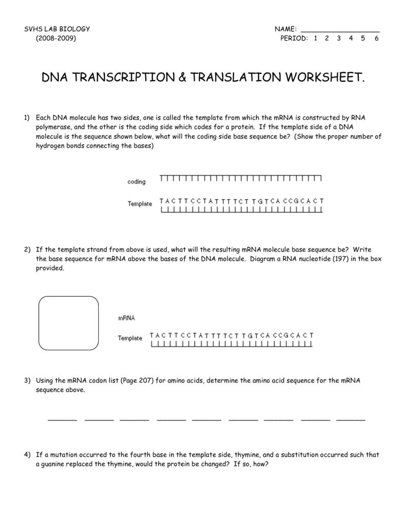 dna diagram worksheet 1967 vw beetle wiring transcription translation