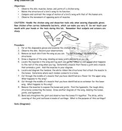 diagram of chcken wing [ 791 x 1024 Pixel ]