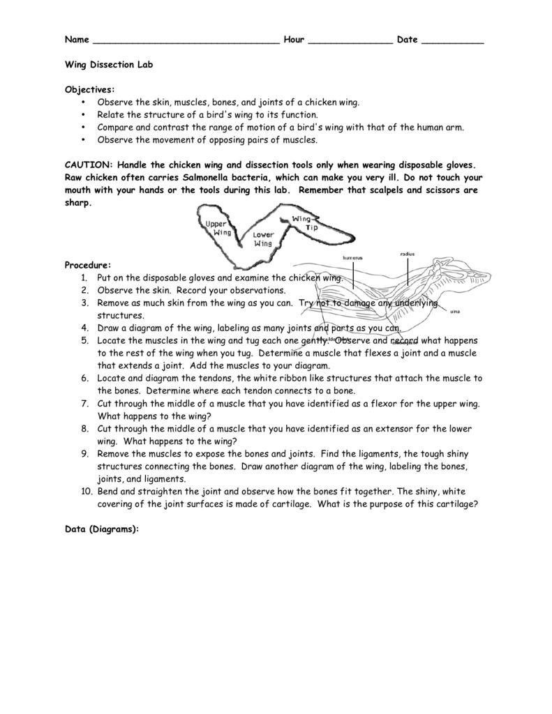 medium resolution of diagram of chcken wing