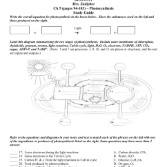 Diagram With Inputs And Outputs Of Photosynthesis Process Foxtel Satellite Dish Wiring Ch 5