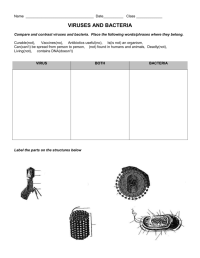 worksheet. Viruses Worksheet. Grass Fedjp Worksheet Study Site