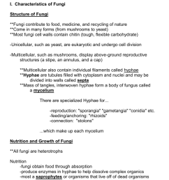 fungi cell [ 791 x 1024 Pixel ]