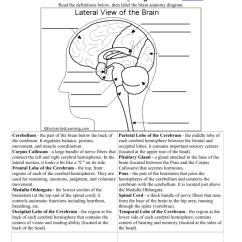 Human Brain Diagram Label 24v Thermostat Wiring The Anatomy Windsor C
