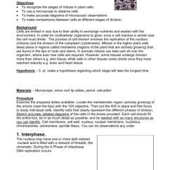Onion Root Tip Diagram 2005 Pontiac Vibe Radio Wiring Mitosis Lab 008993809 1 Dc8b5c903ffae5121d9615d96ebe4ef3 Png