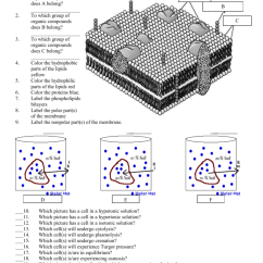 Diagram Of Fluid Mosaic Model Cell Membrane 2002 Grand Cherokee Radio Wiring The