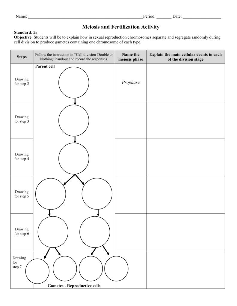 hight resolution of diagram step of meiosi