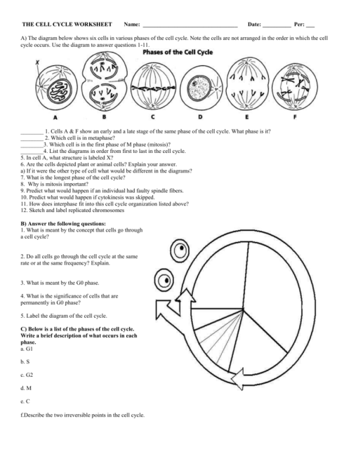 small resolution of cell cycle diagram with answer