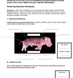 virtual pig dissection worksheetdo now log on to a computer and go to minkusbiology weebly com [ 791 x 1024 Pixel ]