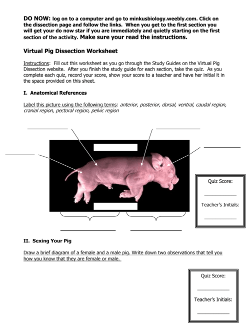 small resolution of virtual pig dissection worksheetdo now log on to a computer and go to minkusbiology weebly com
