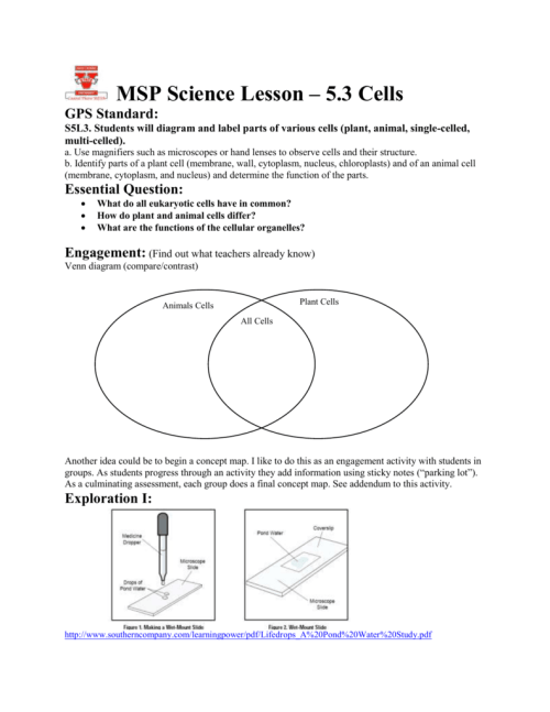 small resolution of students will diagram and label parts of various cells plant animal single celled multi celled a use magnifiers such as microscopes or hand lenses to