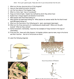 biology 11 fungus unit review note this is just a general guide please also refer to your notes and labs from this unit 1 2 3 4 5 6 7  [ 791 x 1024 Pixel ]