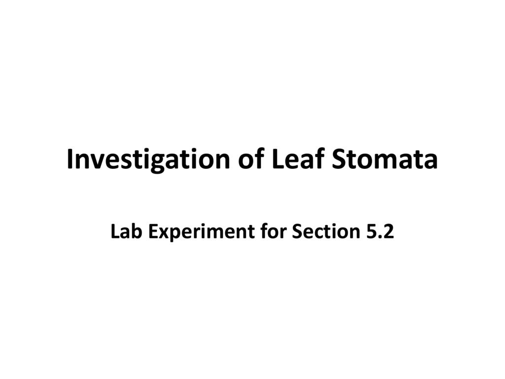 Investigation of Leaf Stomata Lab Answer Key