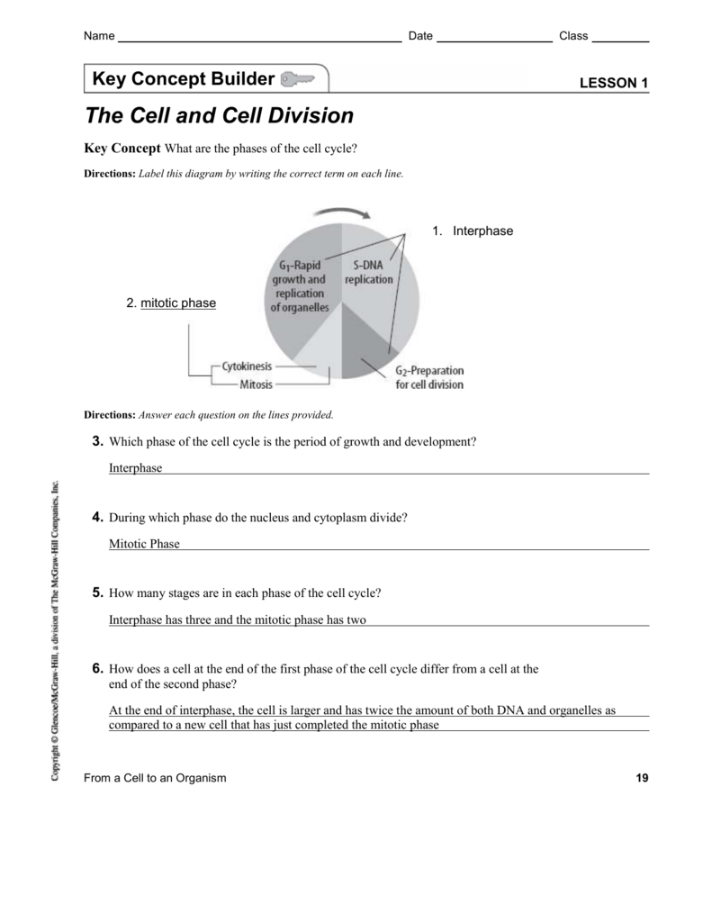 hight resolution of cell cycle diagram with answer