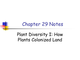 plant evolution cladogram