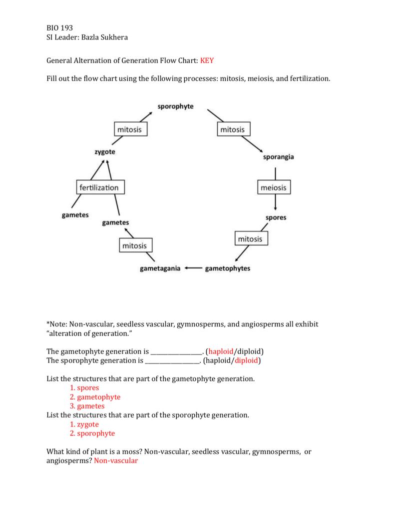 hight resolution of sporophyte diagram