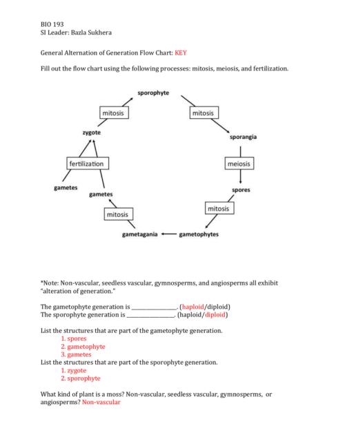 small resolution of sporophyte diagram