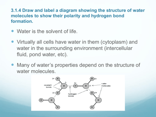 small resolution of 3 1 4 draw and label a diagram showing the structure of water cycle diagram to label and colour water diagram to label