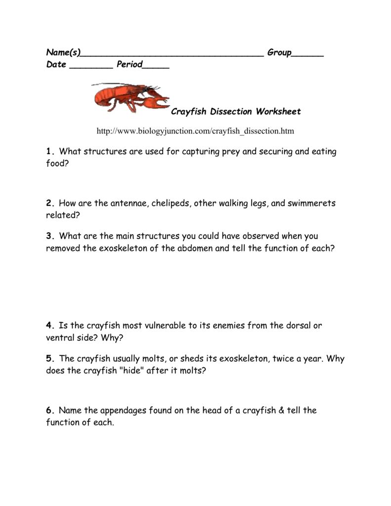 worksheet. Crayfish Dissection Worksheet Answers. Grass