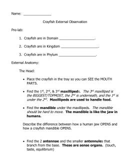 Crayfish Dissection Worksheet