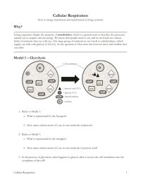 High School Biology Worksheets With Answers Pogil. High ...