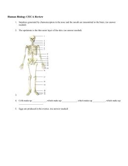 Nervous System Lab Report