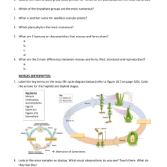 Life Cycle Of A Labeled Moss Diagram 97 F150 Trailer Wiring Mosses Ferns Station Worksheet