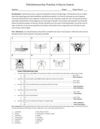 Insect Dichotomous Key Worksheet - Calleveryonedaveday