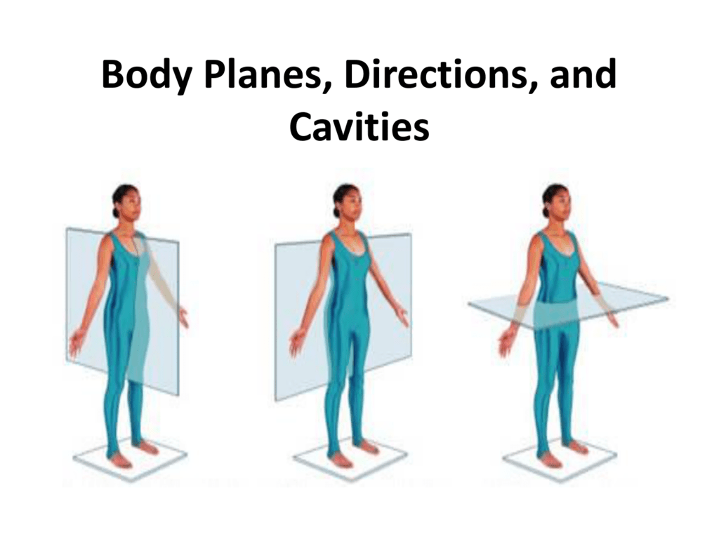 Body Planes Directions And Cavities