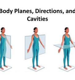 body cavity diagram labeled [ 1024 x 768 Pixel ]