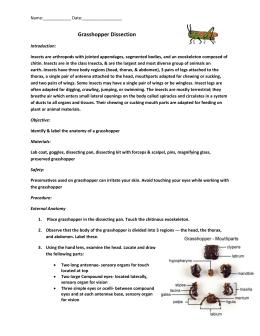 Grasshopper Pre Lab Worksheet